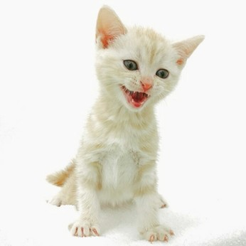 オープニングスタッフ募集「犬好き」「猫好き」集まれ未経験歓迎!もっとペットに詳しくなれちゃう